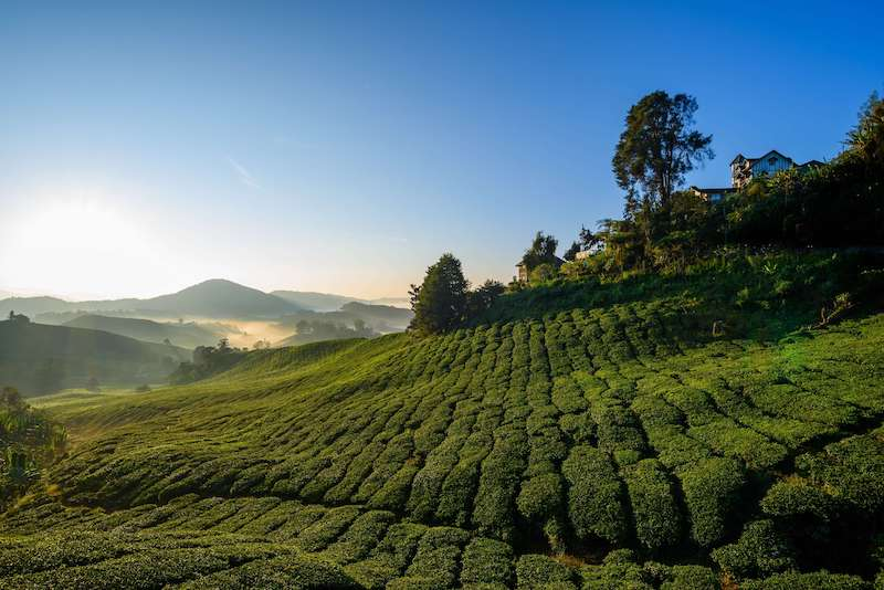 tea plantations; living in penang pros and cons