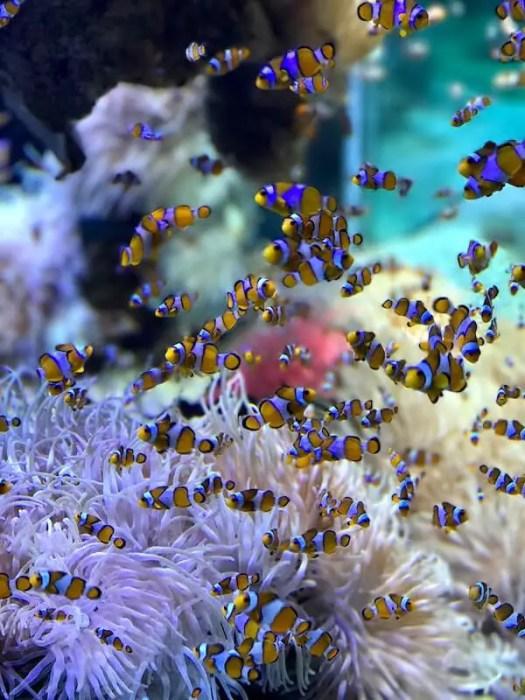 fish mixed inside coral