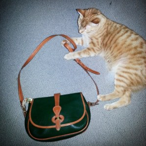 Ulysses the kitty and a vintage dooney bag!
