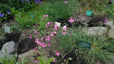 botanische tuin 2