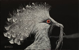 © Kady Dunn, The Offering-Victoria Crowned Pigeon, Scratchboard