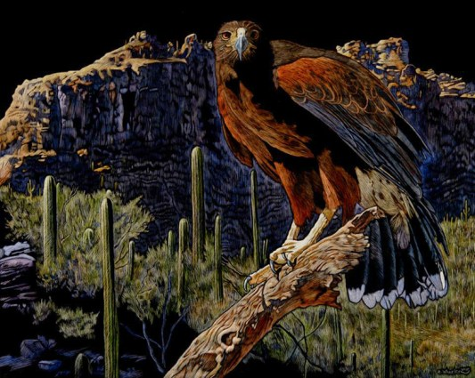 © Rick Wheeler, Harris Hawk-Sonoran Desert, 18x24 scratchboardwatercolor