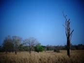 El Guanábano, Edo. Zulia