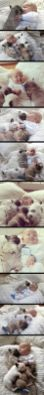 Psalm 91, Psalm 119, William Griffin Brooks, Griffin Brooks, Kathryn Brooks, Sandra Brooks McCravy, Sandi McCravy, Sandy McCravy, Sandra McCravy, Greg McCravy, Gregory McCravy, Lord's Handyman Service, Derek McCravy, Johnathan McCravy, Jonathan McCravy, Derrick McCravy, redhead, red head, Lawrenceville, Susie, Suzie, Manna