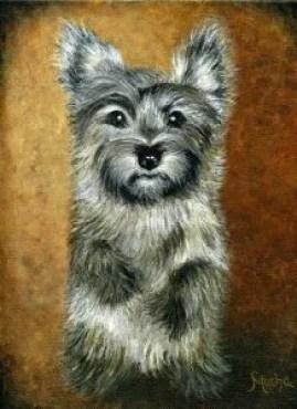Cairn Terrier © Sandra Mucha