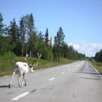 Krievus vilina pārcelties uz dzīvi Zviedrijā.