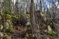 Troļļu mežs, foto Sandra Veinberga