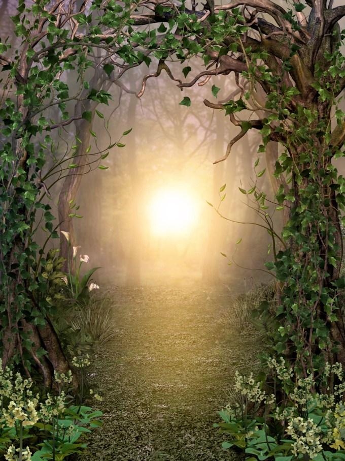 Forêt lumière