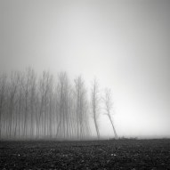 tree-landscapes-by-pierre-pellegrini-3-600x600