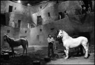 Readying+the+horses+for+the+next+take,+Fellini%27s+Satyricon,+Rome,+Italy,+1969+Mary+Ellen+Mark