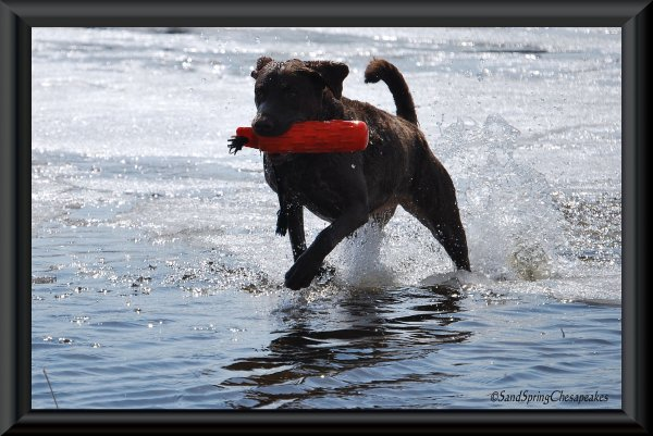 Much better to play in water than run in a ring.