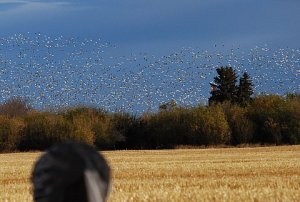 The number of birds was just crazy.