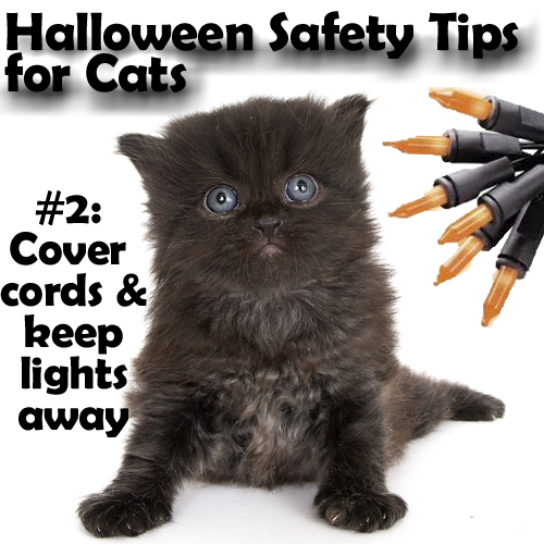 halloween-cover-cords-2