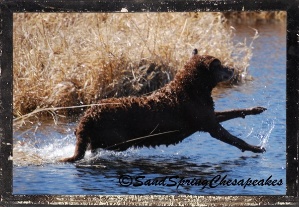 Nellie trying to walk on water to cut Glory off to get to the stick faster.