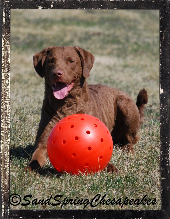 Glory modeling with the ball.
