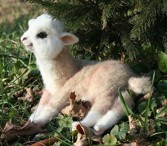 Baby-Alpaca-l