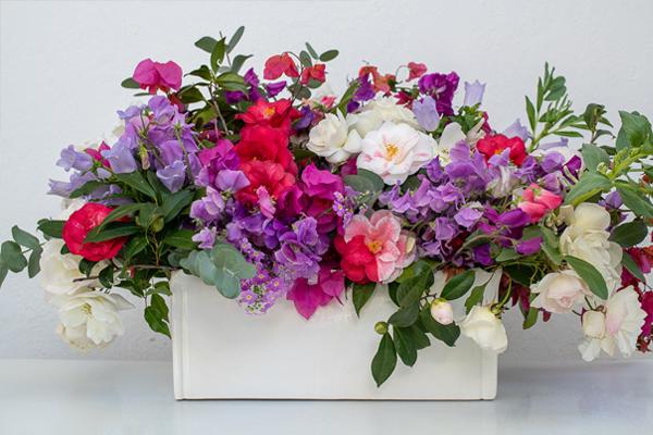 SK_greece flowers images 1 600x400 pixels