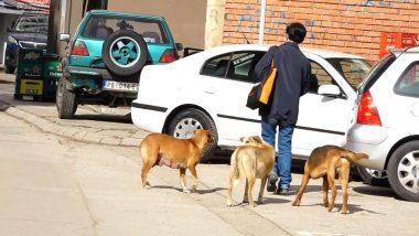 Psi lutalice uklonjeni sa pribojskih ulica
