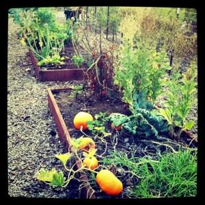 San Elijo Hills Community Gardens