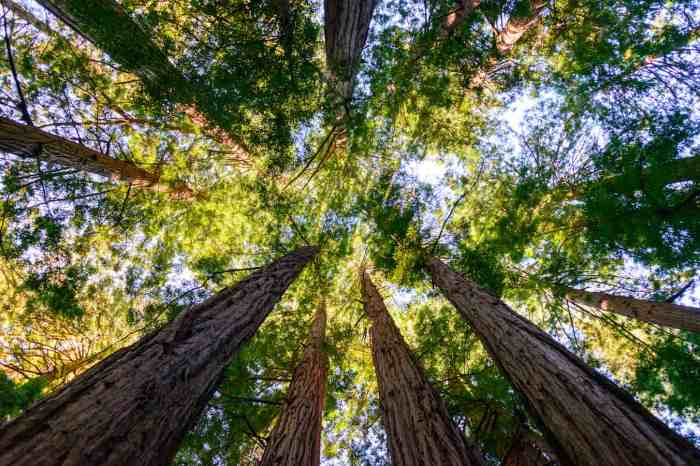 Muir Woods and Sausalito Tour