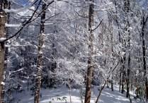 雪山の楽しさを味わいました。