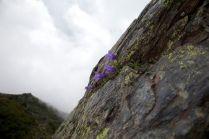 2009北岳027