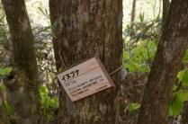 イヌブナの木肌