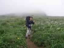 04 以東岳への道、ギボウシの中