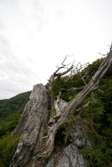 工石山 高知県