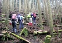6..杉の林の急登