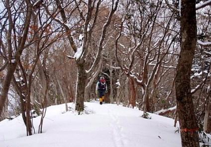 ⑤峠から少しの急登で神社へ向かう稜線に出る。
