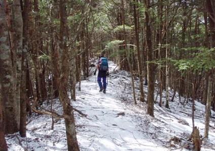 ⑦此処から先も原生林の急登が続く。