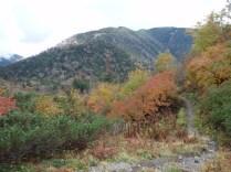 18‐大滝山のダケカンバも