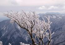 展望丘付近の樹氷
