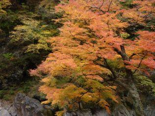 下山後、小倉沢沿いの紅葉が見事でした。