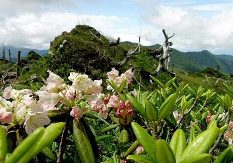 2009年7月20日 自主山行  日光白根山(2578m)(栃木県)