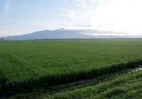2009年7月31日 自主山行  鳥海山(2236m)(山形県・出羽山地)①