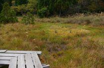 八雲ヶ原湿原、左手から土砂が入り込んでいる