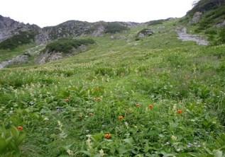 ⑥振り返ればコルまでお花畑が広がる。