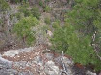 30地蔵岩でクライミングの人が。。。。