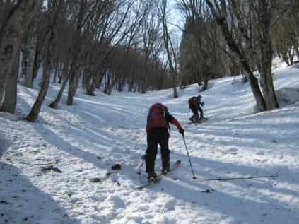 林間のスキーハイクは気分上々