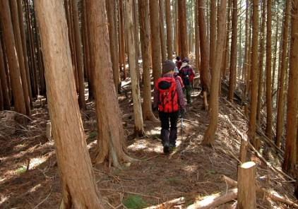 植林帯の中を惣王神社を目指して下る。