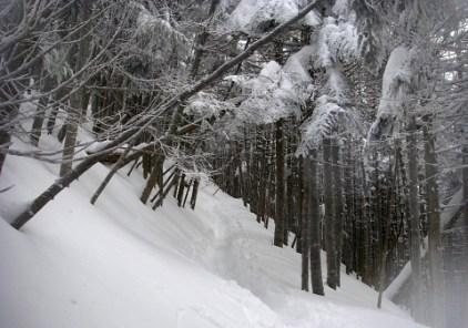 01.樹林帯を登る