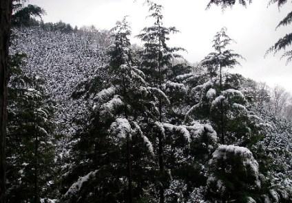 09.白銀のクリスマスツリー
