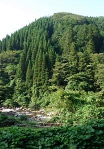 愛知県境踏破1回目(三国山~R153日向) (2)