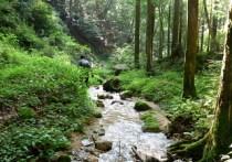 愛知県境踏破1回目(三国山~R153日向) (5)
