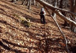 ②峠までは落ち葉の海の急な登り。