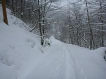 雪は多いけどトレースあり