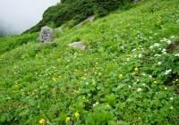 2014年7月20日 三ノ沢岳 お花畑観察山行(自主)