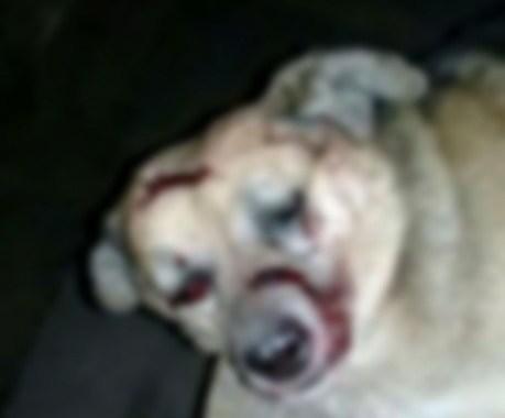 Monje: mató a golpes al perro de su vecino y fue detenido